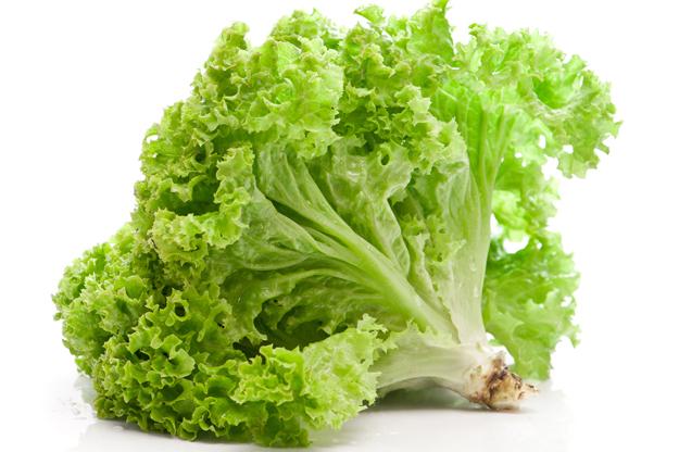 Green-Leaf-Lettuce-Main